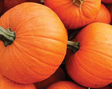 A large pile of bright orange pumpkins.