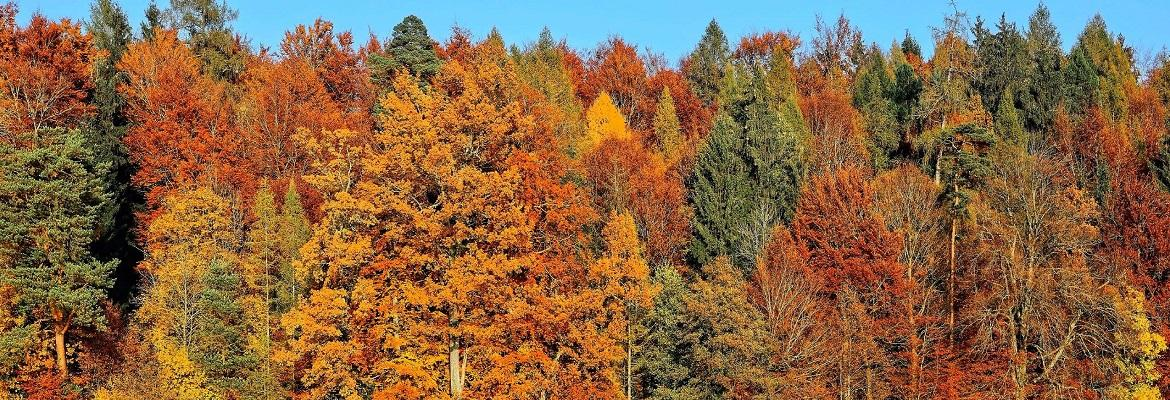 A row of trees with orange and red fall leaves against a blue sky.