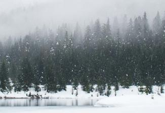 A pine forest next to a lake on a foggy, snowy day.